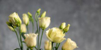 איך לשמור על טריות הפרחים
